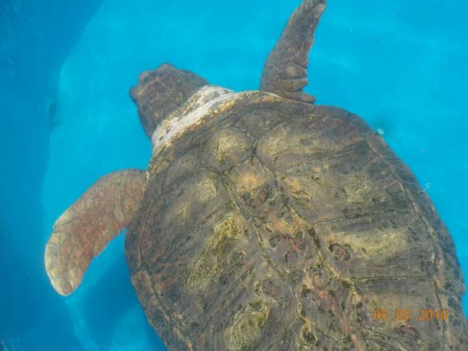 Praia Do Forte ; Entre tortugas y peces.